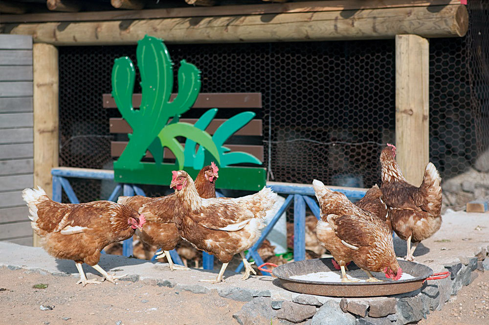 Finca De Arrieta Chicken Farm